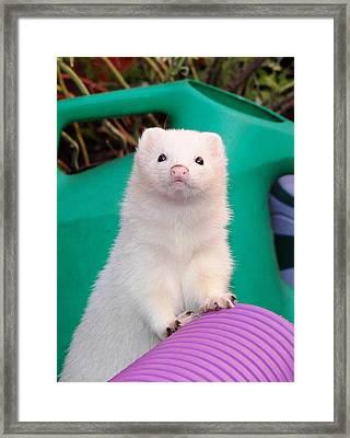 What? Framed Print by Nigel Espley