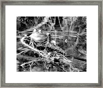 Whatever... Framed Print by Lori Kallay