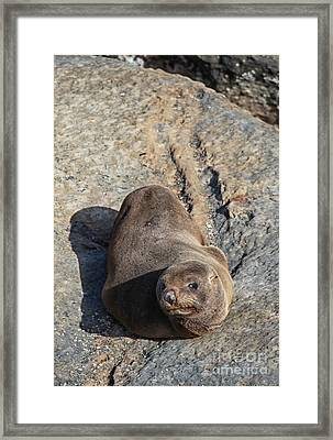Whats Going Up Framed Print by Fabian Roessler