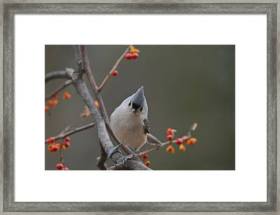 What's New? Framed Print by Deborah Bifulco