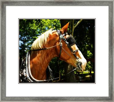 What's That Framed Print by Kathy Barney