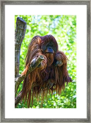What's Up Framed Print by Heiko Koehrer-Wagner