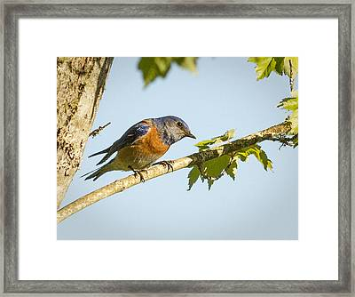 Whats Up Framed Print by Jean Noren