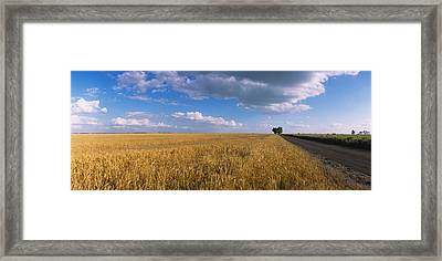 Wheat Crop In A Field, North Dakota, Usa Framed Print by Panoramic Images