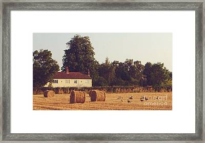 Wheat Field And Geese At Harvest Framed Print by John Clark