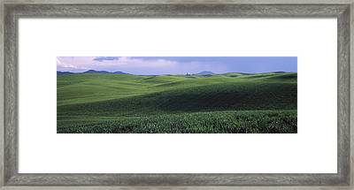Wheat Field On A Rolling Landscape Framed Print by Panoramic Images