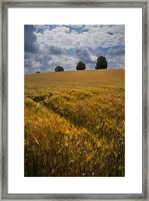 Wheat Fields Framed Print by Debra and Dave Vanderlaan