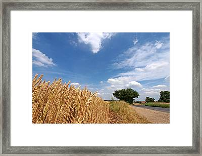 Waiting For Harvest Framed Print by Gill Billington
