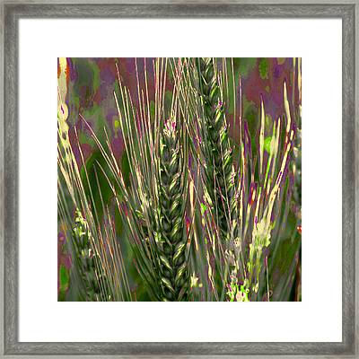 Wheat In The Palouse IIi Framed Print by David Patterson