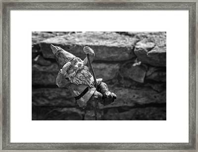 Whee-ee-e  Framed Print by Lynn Palmer