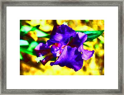 When Iris Eyes Are Smiling Framed Print by Luther   Fine Art