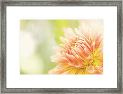 When Summer Dreams Framed Print by Beve Brown-Clark Photography