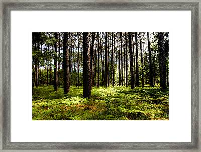 When The Forest Beckons Framed Print by Karen Wiles