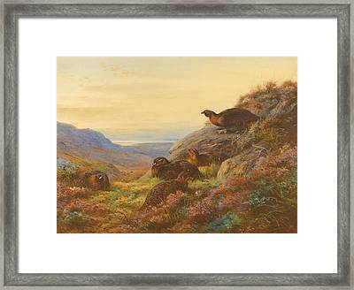 When The Gloaming Comes - Red Grouse Framed Print by Celestial Images