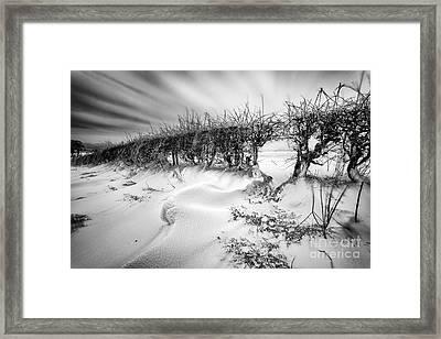 When The Wind Blows Framed Print by John Farnan
