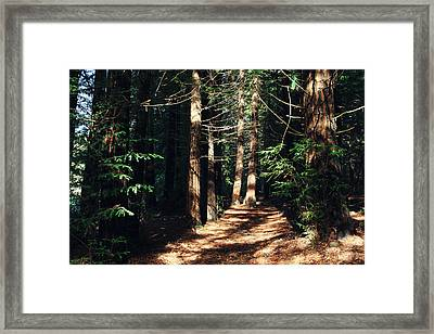 When You See The Light Framed Print by Laurie Search