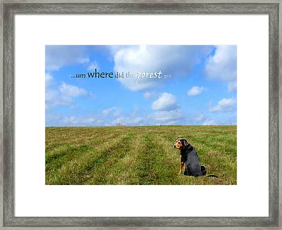 Where Did The Forest Go Framed Print by Christina Rollo