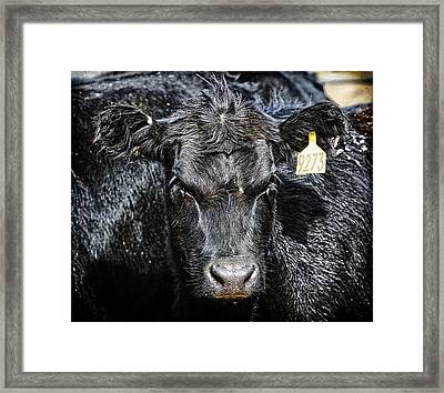 Where Is My Hairbrush Framed Print by Lincoln Rogers