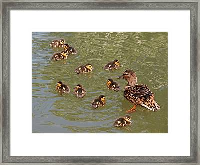 Where Is Number 11 Framed Print by Gill Billington