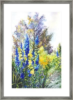 Where The Delphinium Blooms Framed Print by Carol Wisniewski