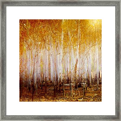 Where The Sun Shines Framed Print by Holly Kempe