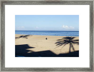 Which Tree Framed Print by Sean Davey