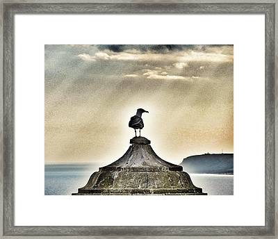 Which Way...? Framed Print by Marianna Mills
