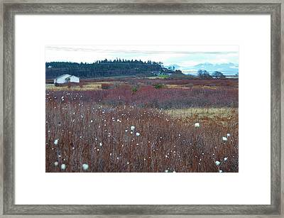 Whidbey Island  Framed Print by Shannon Lee