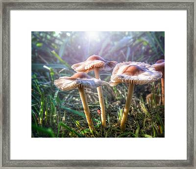 Whimsical Enchanted Garden Of Mushrooms...ladybug Pink Purple Green Framed Print by Wendy Thompson
