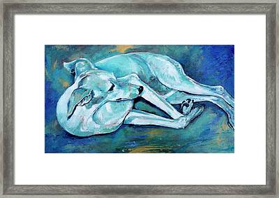 Whippet-effects Of Gravity-3 Framed Print by Derrick Higgins