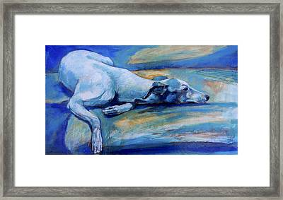 Whippet-effects Of Gravity-6 Framed Print by Derrick Higgins
