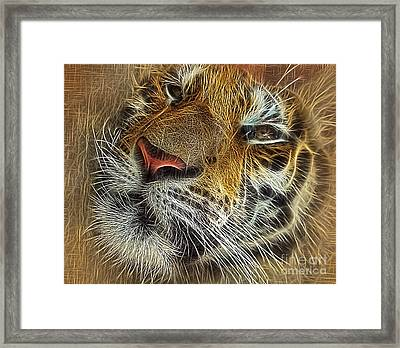 Whiskers Of The Tiger Framed Print by Kaye Menner