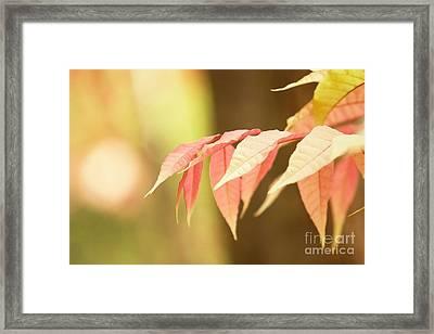 Whisper Framed Print by Andrew Brooks