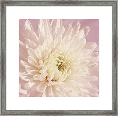 Whispering White Floral Framed Print by Kim Hojnacki