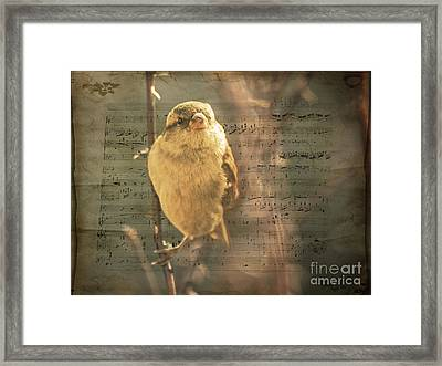 Whistling Song Sparrow Framed Print by Janice Rae Pariza