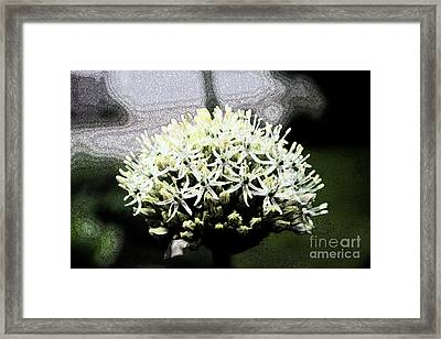 White Allium Abstract Framed Print by Christiane Schulze Art And Photography