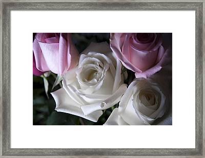 White And Pink Roses Framed Print by Jennifer Ancker