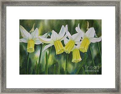 White And Yellow Daffodils Framed Print by Sharon Freeman