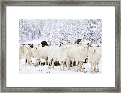 White As Snow Framed Print by Thomas R Fletcher