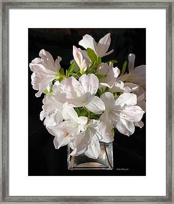 White Azalea Bouquet In Glass Vase Framed Print by Connie Fox