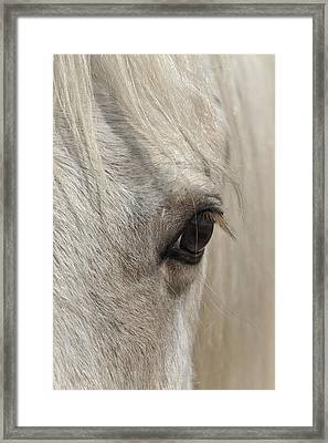 White Beauty D1412 Framed Print by Wes and Dotty Weber