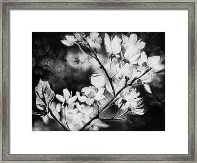 White Blossom Framed Print by Natasha Denger