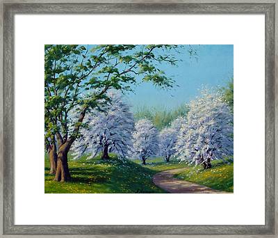 White Blossoms Framed Print by Rick Hansen