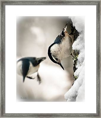 White Breasted Nuthatch In The Snow Framed Print by Bob Orsillo