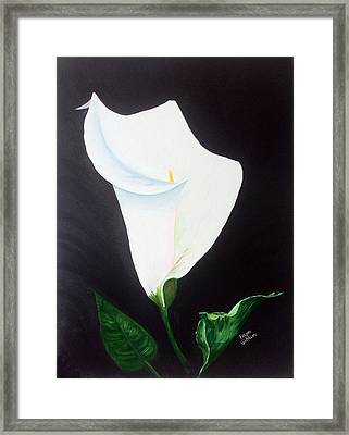 White Calla Lily Framed Print by Faye Giblin