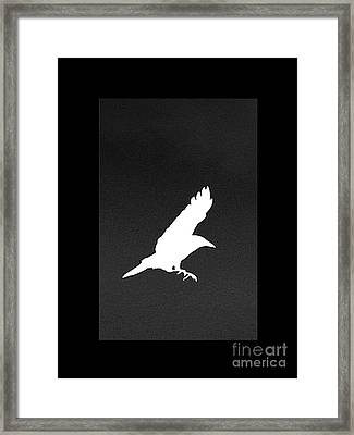 White Crow Framed Print by Linsey Williams