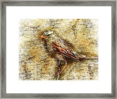 White Crowned Sparrow Framed Print by Gary Bodnar