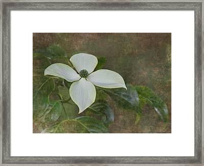 White Dogwood Framed Print by Angie Vogel