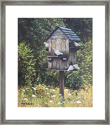 White Doves Using A Dovecote  Framed Print by Martin Davey