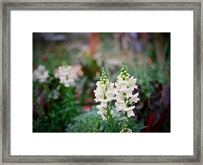 White Dreams Framed Print by Linda Unger